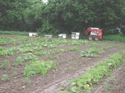 Beehives set up for pollination