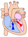 Ventricular systole