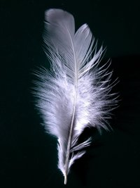 Closeup on a single white feather